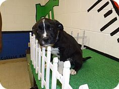 Act quickly to adopt 13D-1176 (5/26). Pets at this shelter may be held for only a short time.