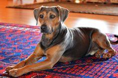 Kula Maui, Especie Animal, Doge, Pets, Nature, Animals, Naturaleza, Animales, Animaux