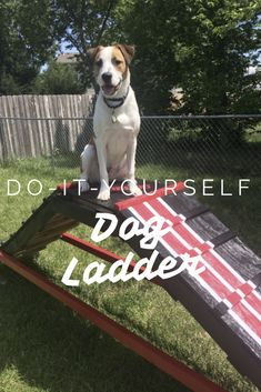 Dog digging up the yard provide an attractive alternative dog diy dog ladder create your own obstacle for your dog great for the backyard solutioingenieria Images