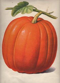 Halloween Clipart - Pumpkin - The Graphics Fairy