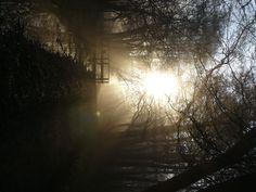 Misty Morning at Brobæk Mose!