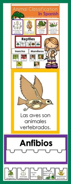 Animal Classification In Spanish has everything you need to teach your students about the different animal groups.  Large Posters (10 x 7.5) - Each poster features one animal group and a list of basic features that animals in that group have.  Animal Group Characteristic Posters In One Page.  Animal Classification Sort: Help students learn how to sort animals with this sorting activity.   Animal Characteristic Puzzles: 6 different puzzles are included.