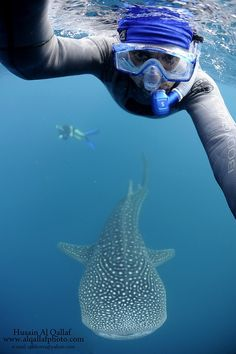 Definitely on our bucket list! Even better if we are diving with one! Swim with a whale shark officially on my bucket list Swimming With Whale Sharks, Shark Diving, Scuba Diving, Orcas, Parkour, Underwater World, Underwater Swimming, Mundo Animal, Pisces