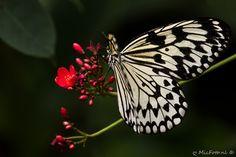 Vlinder #Emmen