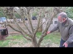 Do you need solutions for How To Prune A Fig Tree from your garden? No need to worry when The Gardening Dad is here for you. Get in touch with the gardening expert and get the top solution today. Growing Fig Trees, Aquaponics System, Plants, Gardening, Figs, Rocks, Homemade, Touch, Youtube