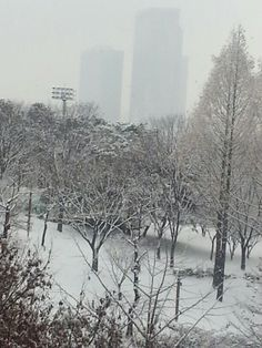 Snow falling in Suwon city