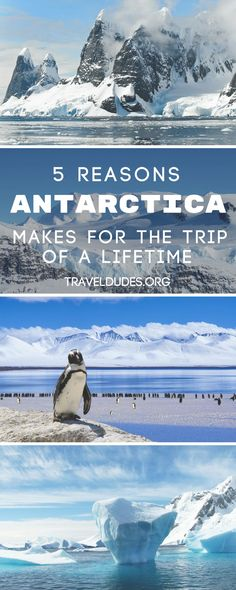 5 reasons an Antarctica cruise makes for the bucket list worthy adventure of a lifetime. Get up close to nature with whales, seals and penguins galore, unleash your inner photographer, and kayak amongst beautiful glaciers and icebergs. Plan a trip to the 7th continent and make memories to last a lifetime. | Travel Dudes Travel Community #Antarctica