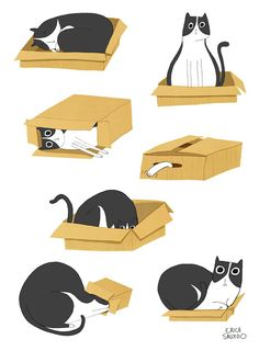 Erica Salcedo Illustration of cat box love:) Crazy Cat Lady, Crazy Cats, I Love Cats, Cool Cats, Illustration Inspiration, Illustration Art, Animal Illustrations, Illustrations Posters, Gatos Cat