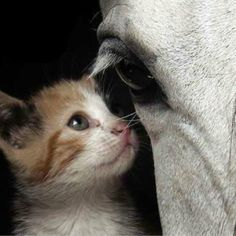 We dont have to be the same to see eye to eye on certain things. http://source:pinterest.com Horse Whisperer