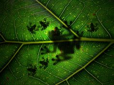 shadow shot - mamma tree frog and 6 babies