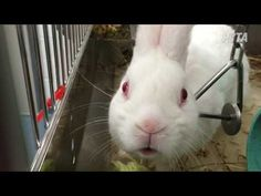 PETA Exposes Animal Cruelty at University of Pittsburgh Laboratories