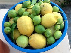 lemons great and sma