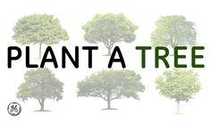 Trees help us breathe.