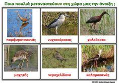 Το νέο νηπιαγωγείο που ονειρεύομαι : Τα αποδημητικά πουλιά που μας επισκέπτονται την άνοιξη - Λίστες αναφοράς για το νηπιαγωγείο .