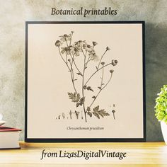 Chrysanthemum print now $2.49 instead of $3.99!!!