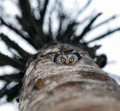 Soooo cute! I love owls!