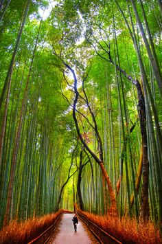 #Bamboo_Forest in #Japan http://en.directrooms.com/hotels/country/1-3/