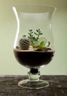Zen Terrarium - Summer Gardening Ideas / Armstrong Garden Centers