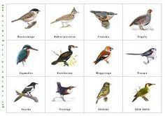 Bergamott: Itthon telelő madarak II. Tree Day, Home Learning, Bird Illustration, Earth Day, Primary School, Activities For Kids, Birds, Education, Animals