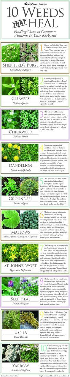 "Permaculture Ideas: 10 ""Weeds"" (aka Herbs) That Heal permacultureideas.blogspot.com"
