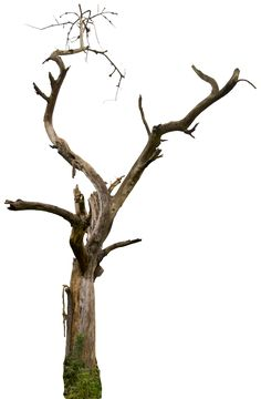 Dead tree 04 HQ by gd08.deviantart.com on @deviantART