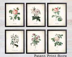 Redoute Roses Print Set. Botanical Print. Art Print. Wall Art. Flower Prints. Rose Prints. Illustration. Posters. Dining Room Art. Bedroom