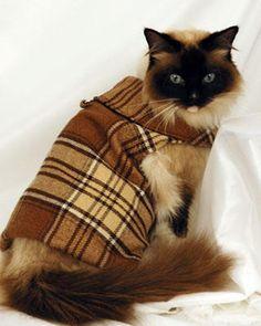 d2mskqj2den.jpg 386×473 pixels | Chic Pets | Pinterest | Cat ...