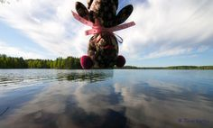 THAIvastellen Leivonmäellä toukokuun lopussa 2012, Teddy, Finland