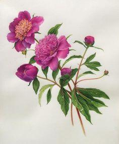 Karen Kluglein | American Society of Botanical Artists