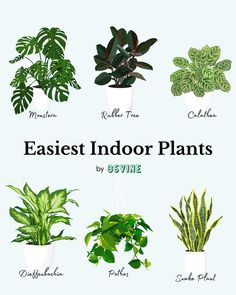 easiest indoor plants to care for