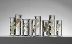 Marine Life Specimens Imagined in Glass by Steffen Dam