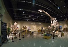 Burpee Museum of Natural History, Rockford, IL. © Mark Ryan