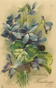 BIRTHDAY GREETINGS  violets Catherine Klein, Best Wishes Card, Vintage Birthday Cards, Sweet Violets, Picture Postcards, Painted Leaves, Illustrations, Decoupage, Flower Pictures