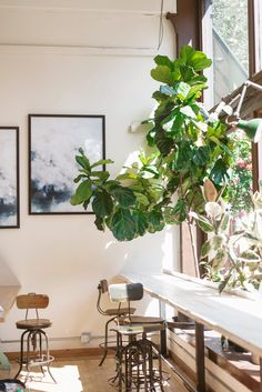 Seattle's Most Instagram-Worthy Places in Pioneer Square - Emma's Edition Seattle Coffee Shops, Things To Do Seattle, Coffee Shop Aesthetic, Seattle Photography, Cute Store, Sleepless In Seattle, Instagram Worthy, Photo Location, New Homes