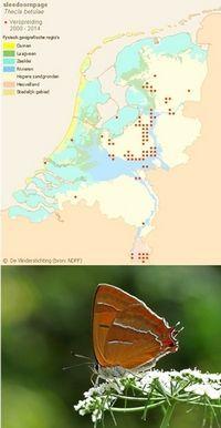 Verspreiding sleedoornpage (boven; bron: www.telmee.nl) en de vlinder (onder; foto: Kars Veling)