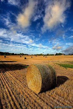 ˚Midsummer Harvest - Wisconsin