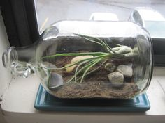 Horizontal homemade terrarium. I happen to have hoarded one of these big glass jugs already!