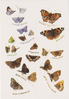 Postcard sent to Germany >> Butterflies by Marjolein Bastin (Dutch illustrator)