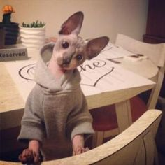 Basic Dog Hoodie - Heather Gray at Baxterboo