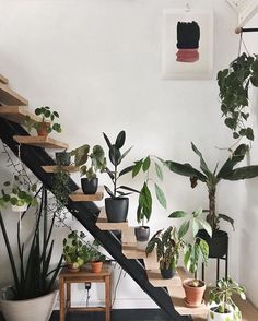 4,341 Likes, 24 Comments - The Sill (@thesill) on Instagram #InteriorDesignPlants