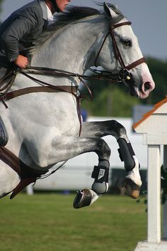 County show jumping by renrut on Flickr.