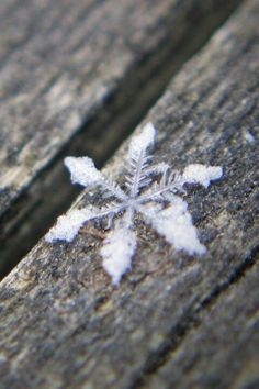 nature | winter wonderland - perfect snowflake
