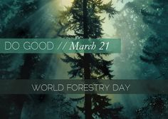 March 21 - World Forestry Day