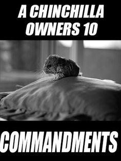 A Chinchilla Owners 10 Commandments