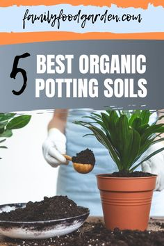 We have compiled the best organic potting soil. There are many benefits to using organic soils when potting your plants, especially if you are potting seedlings or young plants. Organic soils soak up more water and hold a higher volume of moisture in general. This promotes healthy and fast root growth which is perfect for strengthening young plants. In this pin, we will be looking at five of the best organic soils on the market today. #organicpot #organicsoil #gardening Organic Soil, Organic Plants, Organic Gardening, Gardening Tips, Indoor Gardening, Beef Recipes, Real Food Recipes, Cooking Recipes, Healthy Fruits And Vegetables