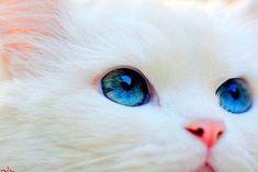 Quem não se relaciona bem com o próprio inconsciente não topa o gato. Ele aparece, então, como ameaça, porque representa essa relação precária do homem com o (próprio) mistério. O gato não se relaciona com a aparência do homem. Ele vê além, por dentro e pelo avesso. Relaciona-se com a essência. Se o gesto …