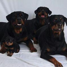 Four Generations . Von JACA Haus Rottweilers