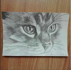 Soutěže a akce | Kočičí svět Vítězný obrázek z kreslící soutěže. Vítěz obdržel balíček Kočičího světa s odměnami :)