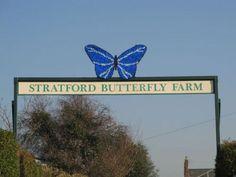 butterfly farm stratford - Google Search