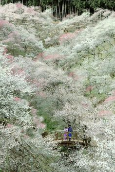 Japón Tokyo Sakura
